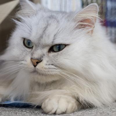 猫カフェ vol.1